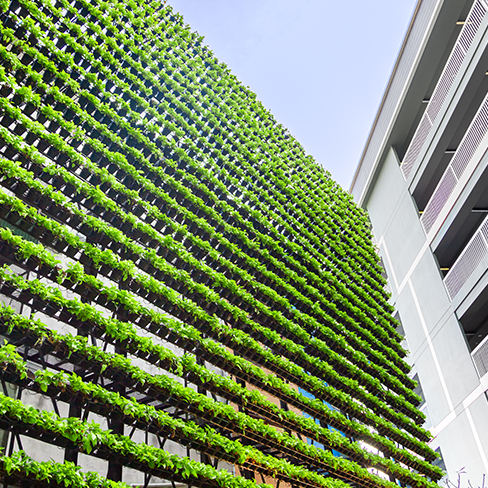 Photo of a building with plants on the side.